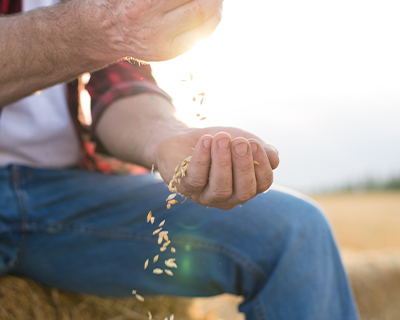 Farmer holding grain