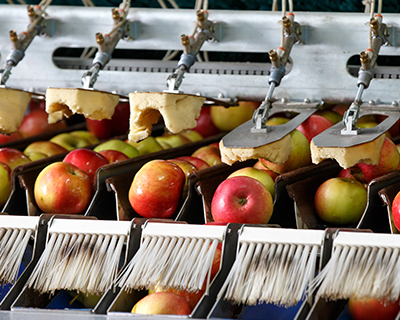 Apples getting processed